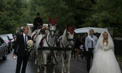 Карета и лошади на свадьбе