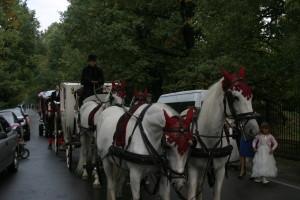 Лошадиный кортеж на свадьбу