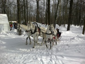 Катание на тройке лошадей