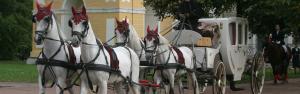 bg-horses