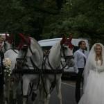 Лошадиная карета на свадьбе