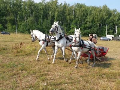 Готовь сани летом тройка лошадей в санях