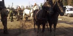 Лошади запряженные в пушки на съемках кино