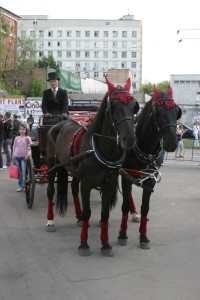 Лошади на премии муз тв