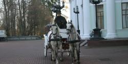 Лошади на съемках кино