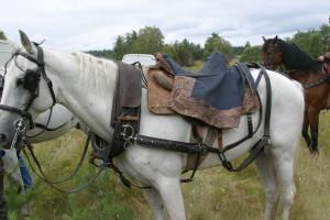 Лошадь в упряже