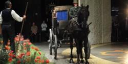 Лошадь на сцене театра