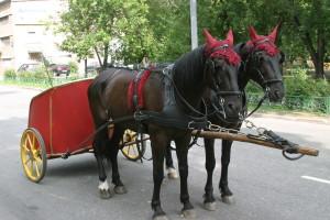 Пара лошадей в хомутах запряженная в коллесницу