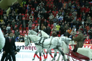 Тройка лошадей в санях на чемпионате мира