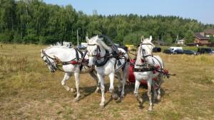 Тройка лошадей в санях