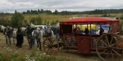Четыре лошади готовятся к съемкам